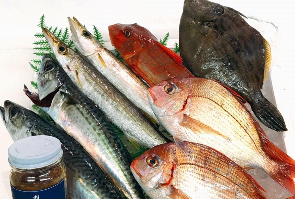 魚卓おまかせ相模湾の地魚セット